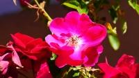 Blüte im Garten unseres Ferienhauses