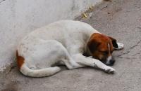 Schlafender Hund vor kleiner Taverne