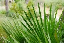 Lange Blätter