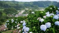 Unzählige Hortensien und der Ort Furnas im Hintergrund