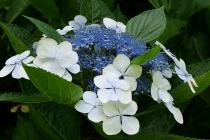 Verschiedenfarbige Blüten