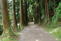 Schöner Wanderweg durch den Wald