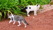 Zwei streunende Katzen am Rastplatz