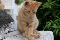 Junge Katze des Hauses
