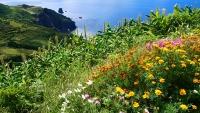 Flores - ganz einfach Flores