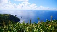 Grüne Pflanzen und das Meer