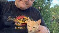 Abendlicher Besuch von Katzenbaby
