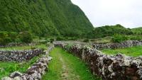 Wanderweg in tief grüner Landschaft