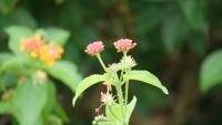 Kleine Blüten