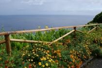 Blumen und das Meer - Flores