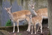 Neugierige Bambies