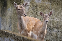 Bambie mit Mama