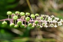 Ganz kleine Blüten