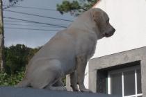 Hund sitzt auf Hausmauer