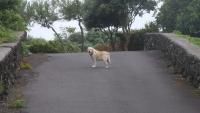 Dieser Hund begleitete mich ein Stück des Weges
