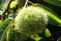 So eine Pflanze habe ich auch noch nie gesehen