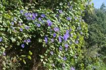 So viele blaue Blüten auf einmal!