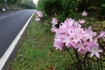 Oh diese Blumen am Straßenrand!