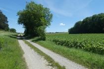 Radweg zwischen Prottes und Groß Schweinbarth
