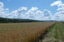 Wolkenstimmung über Getreidefeld