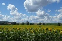 Wolkenstimmung über Sonnenblumenfeld