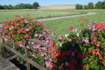 Holzsteg mit Blumenschmuck in Spannberg; Radweg im Hintergrund
