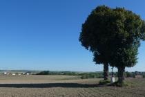 Alter Baum und Blick ins Weinviertel