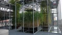 Künstlich mit Sonnenlicht über Spiegel beleuchtete Grünpflanzen