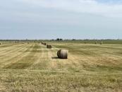 Strohballen auf einem Feld nahe Podersdorf