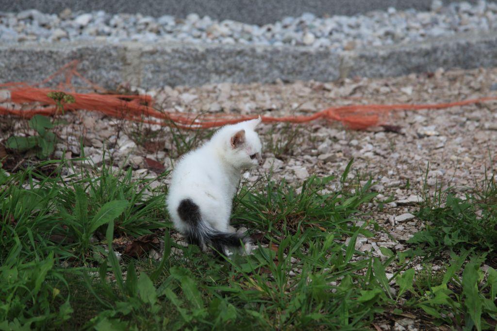 Junges Kätzchen am Aspalterhof